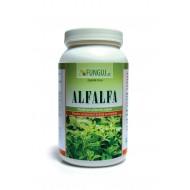 ALFALFA, prášek pro přípravu nápoje 80g